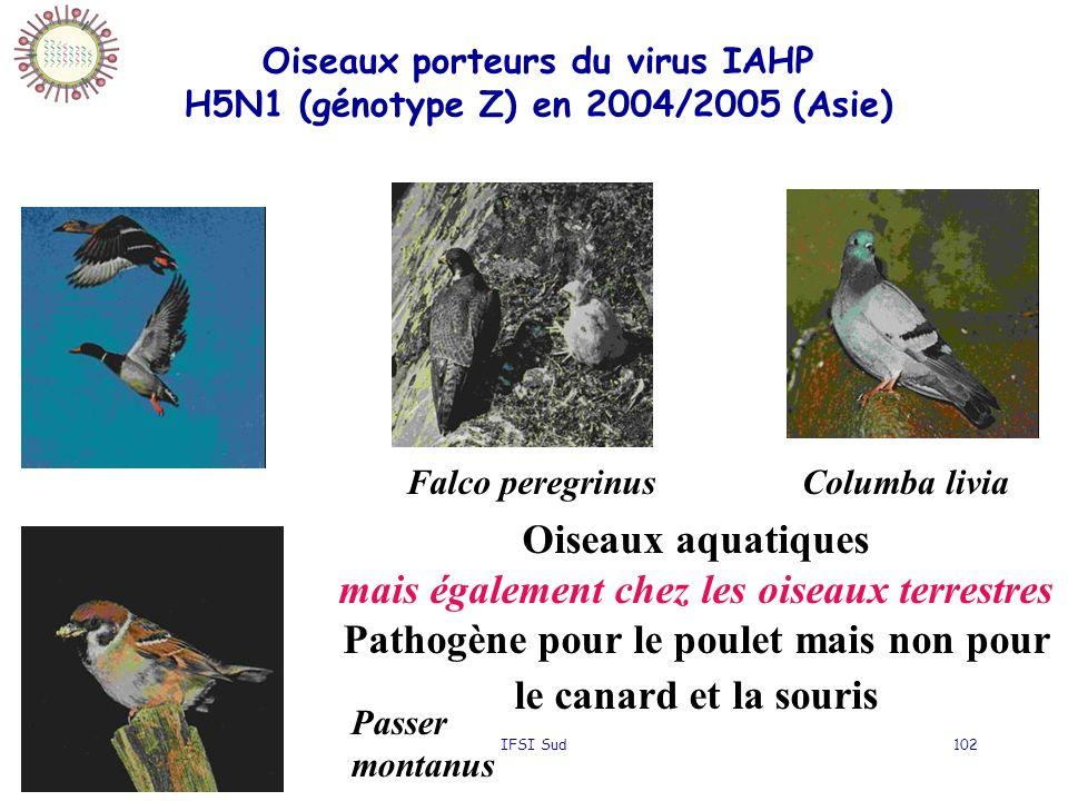 Oiseaux porteurs du virus IAHP H5N1 (génotype Z) en 2004/2005 (Asie)