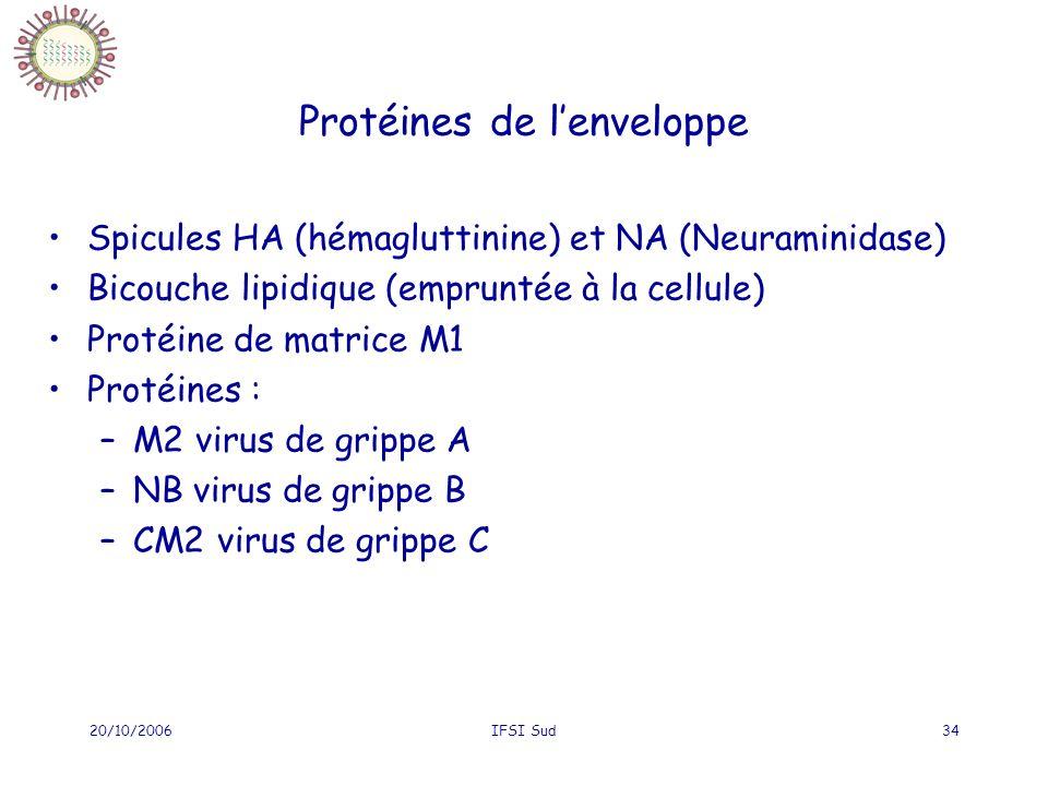 Protéines de l'enveloppe