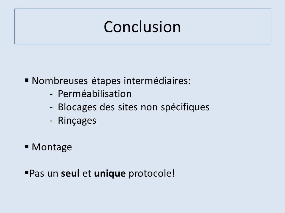 Conclusion Nombreuses étapes intermédiaires: - Perméabilisation