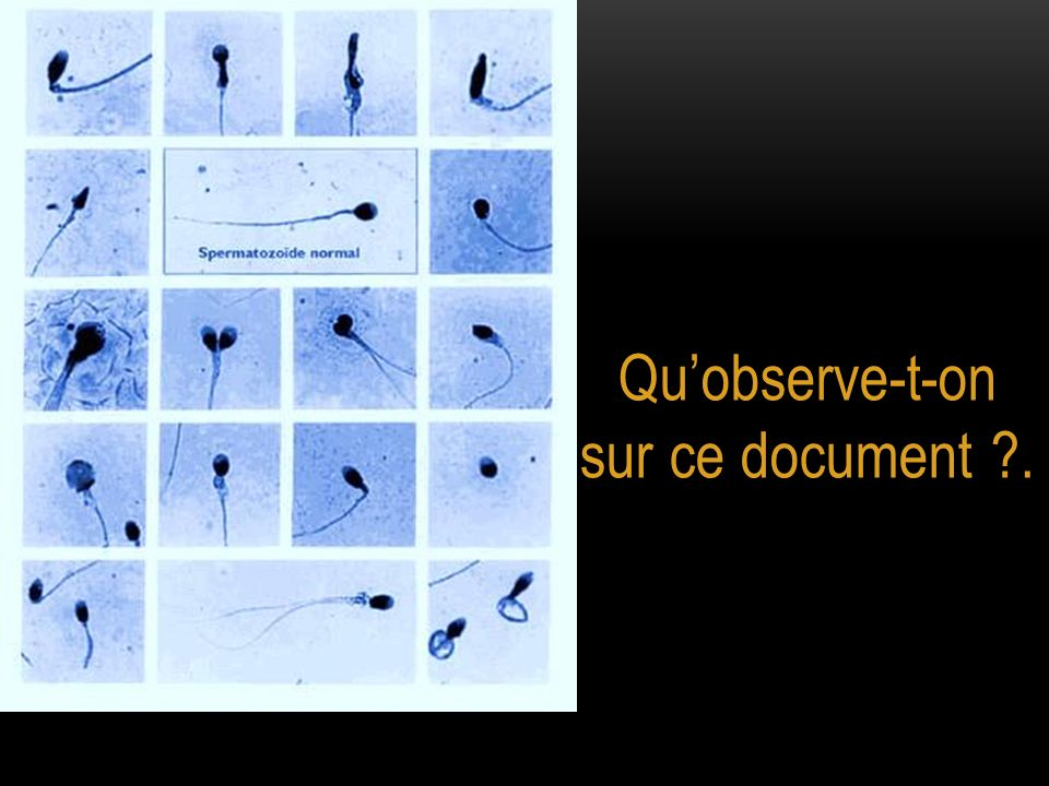 Qu'observe-t-on sur ce document .