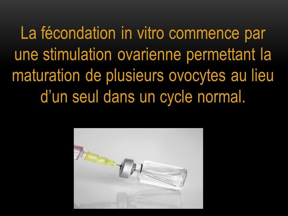 La fécondation in vitro commence par une stimulation ovarienne permettant la maturation de plusieurs ovocytes au lieu d'un seul dans un cycle normal.