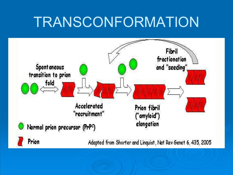 TRANSCONFORMATION