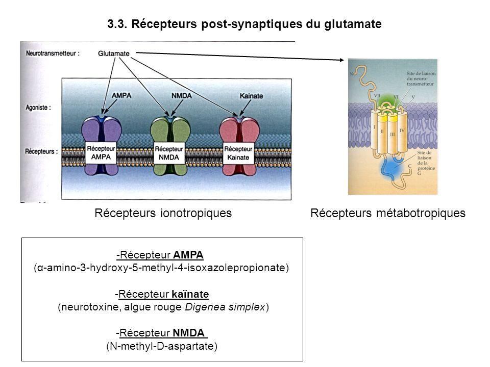 3.3. Récepteurs post-synaptiques du glutamate