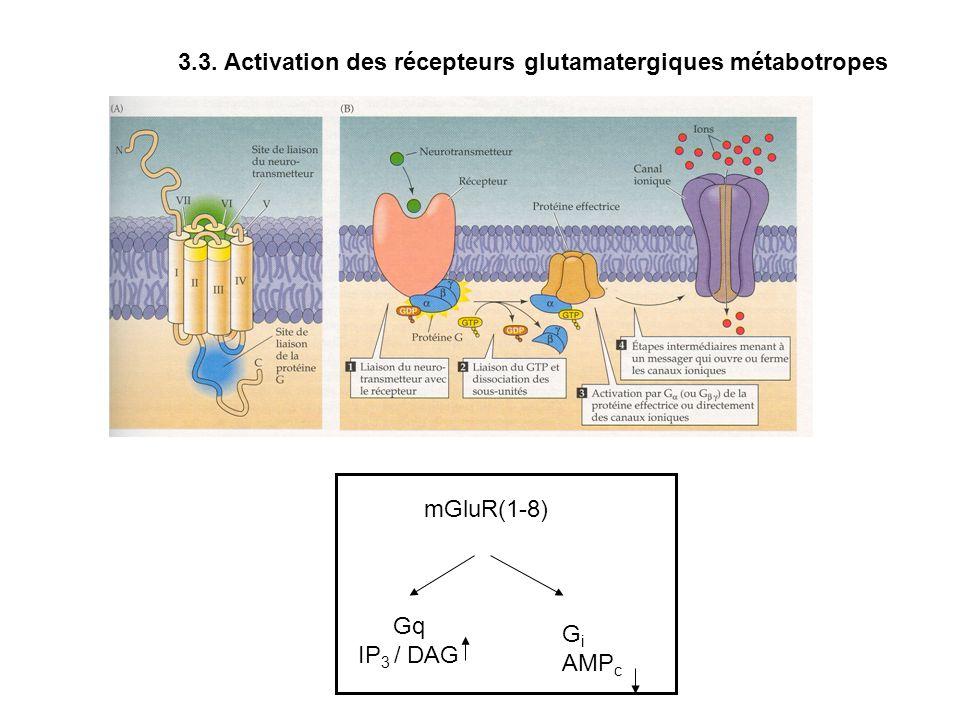 3.3. Activation des récepteurs glutamatergiques métabotropes