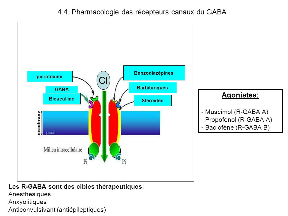 Cl 4.4. Pharmacologie des récepteurs canaux du GABA Agonistes: