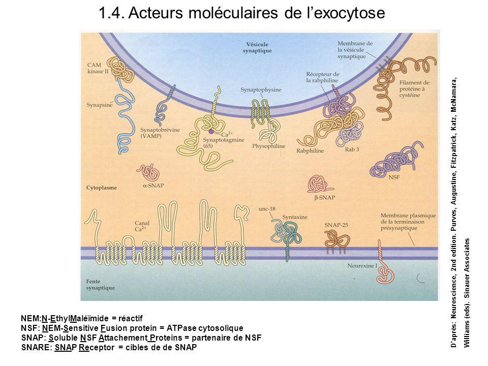1.4. Acteurs moléculaires de l'exocytose
