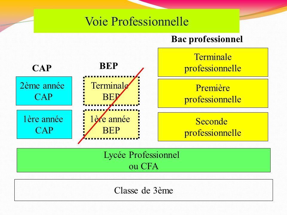 Voie Professionnelle Bac professionnel Terminale professionnelle BEP