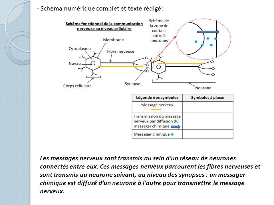 - Schéma numérique complet et texte rédigé: