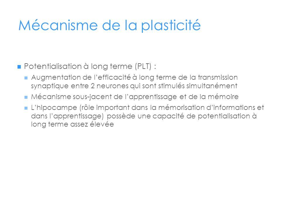 Mécanisme de la plasticité