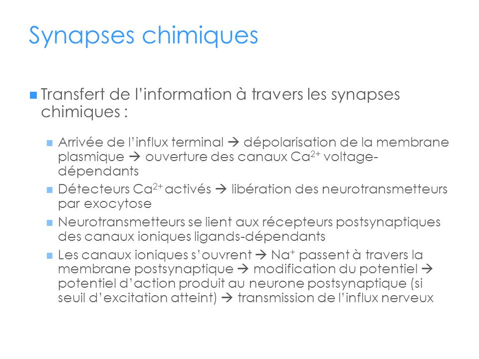 Synapses chimiques Transfert de l'information à travers les synapses chimiques :