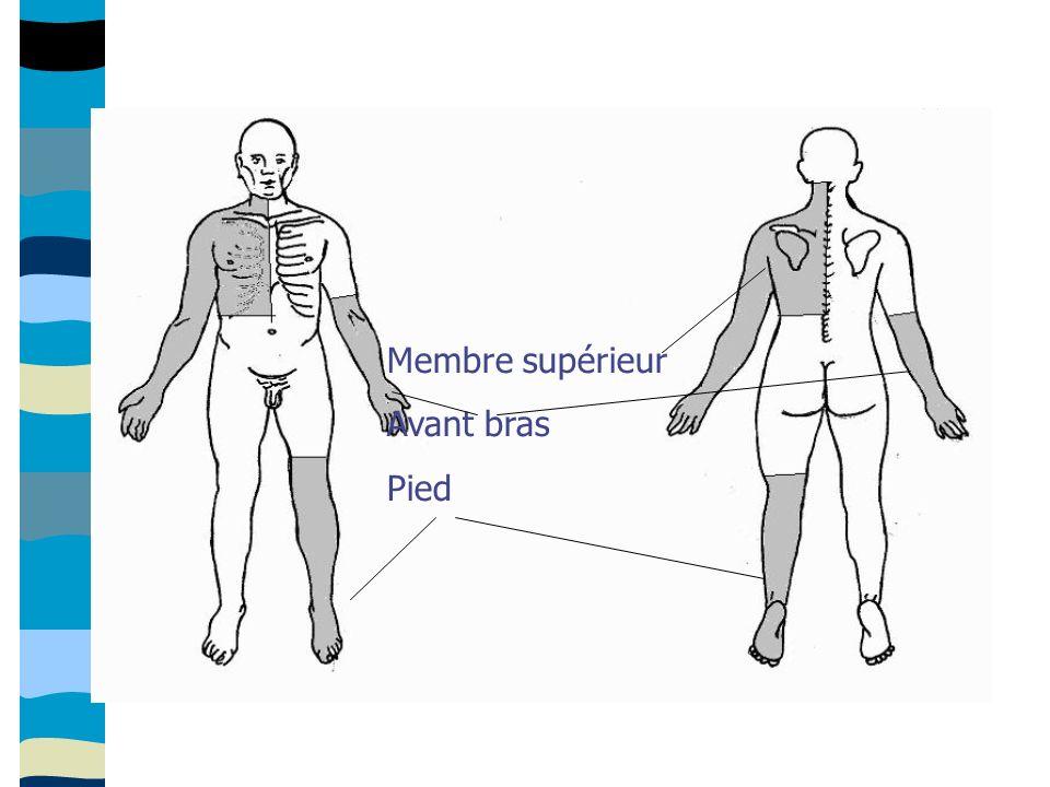 Membre supérieur Avant bras Pied