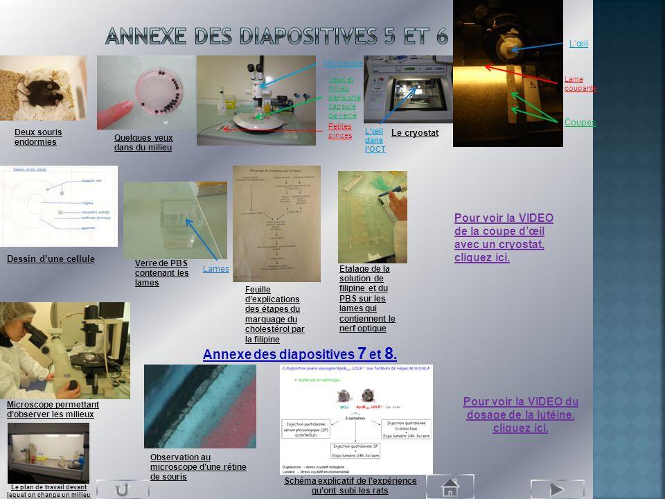 Annexe des diapositives 5 et 6