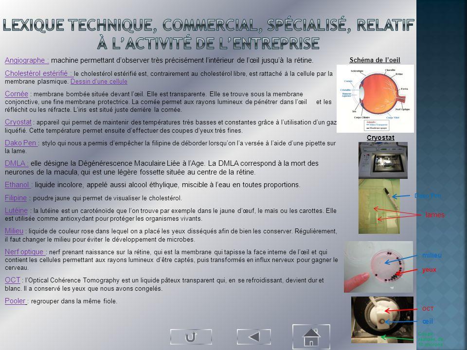 Lexique technique, commercial, spécialisé, relatif à l'activité de l'entreprise