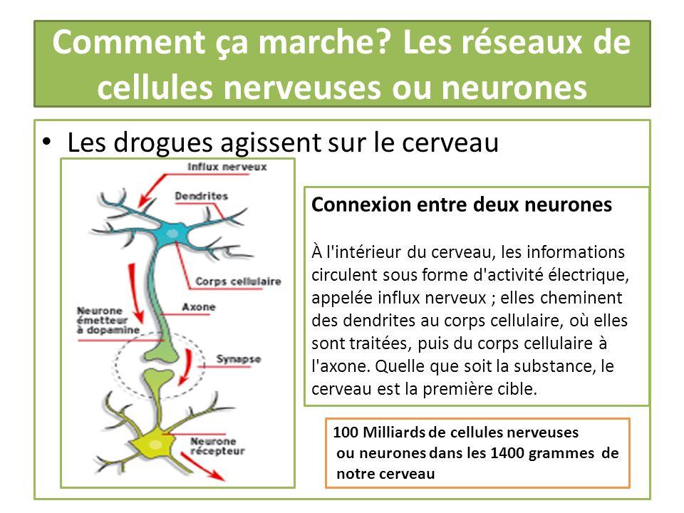 Comment ça marche Les réseaux de cellules nerveuses ou neurones