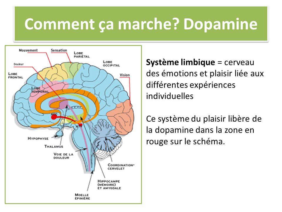 Comment ça marche Dopamine