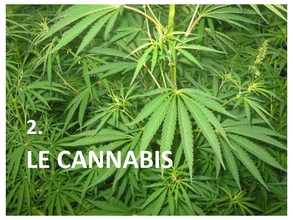 2. LE cannabis