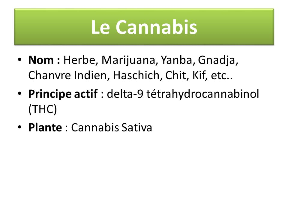 Le Cannabis Nom : Herbe, Marijuana, Yanba, Gnadja, Chanvre Indien, Haschich, Chit, Kif, etc.. Principe actif : delta-9 tétrahydrocannabinol (THC)