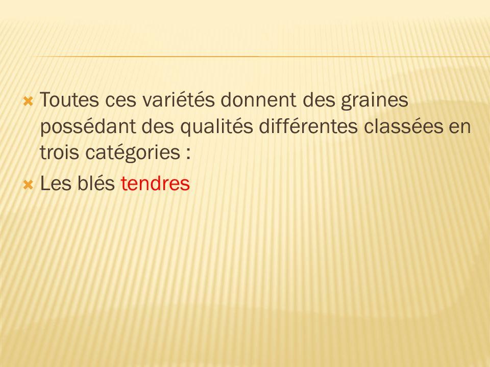 Toutes ces variétés donnent des graines possédant des qualités différentes classées en trois catégories :