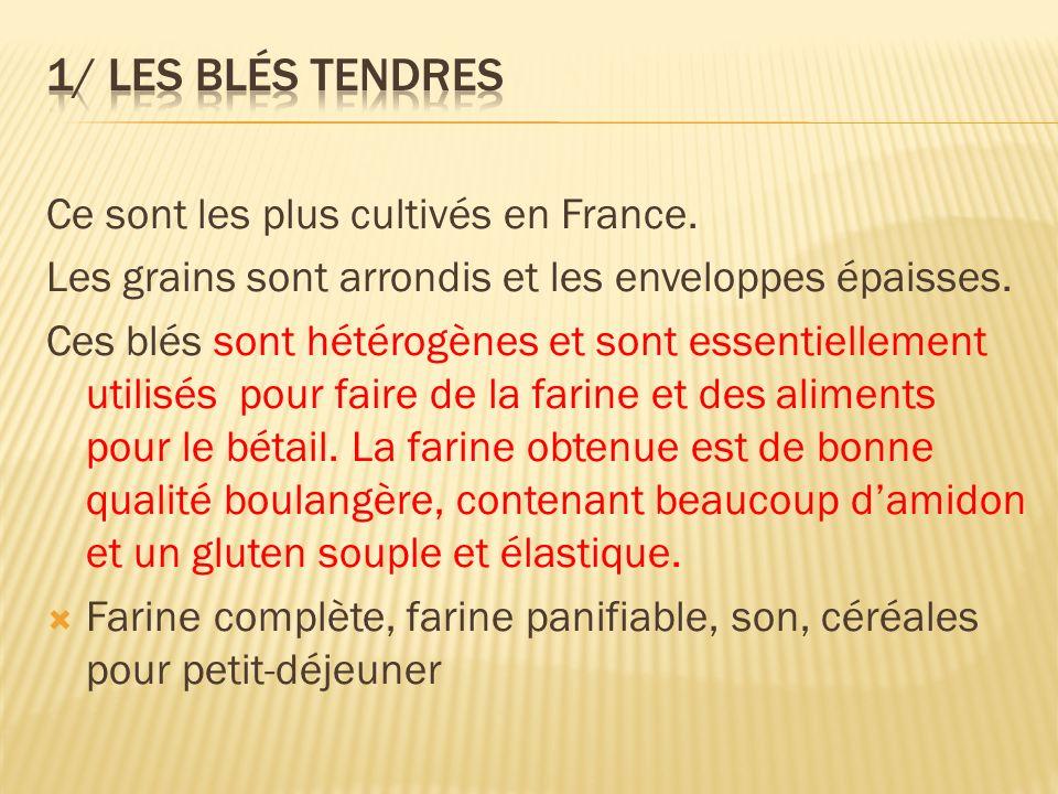 1/ Les blés tendres Ce sont les plus cultivés en France.