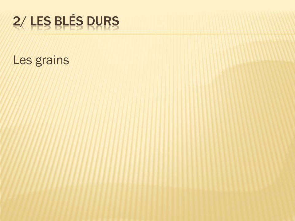 2/ Les blés durs Les grains