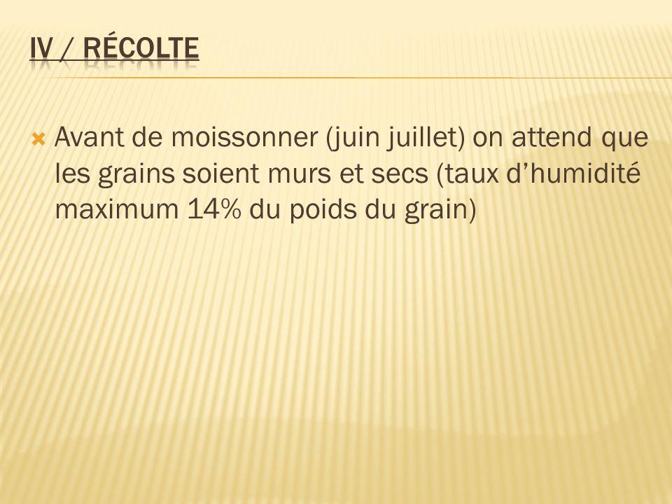 IV / Récolte Avant de moissonner (juin juillet) on attend que les grains soient murs et secs (taux d'humidité maximum 14% du poids du grain)