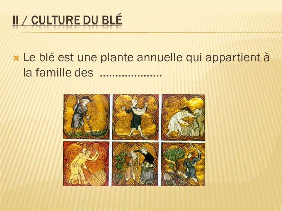 II / Culture du blé Le blé est une plante annuelle qui appartient à la famille des ………………..