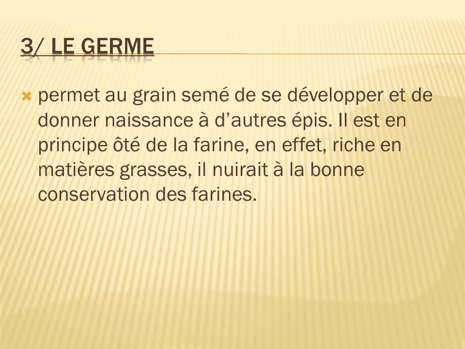 3/ Le germe