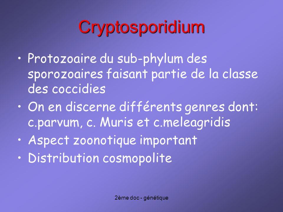 Cryptosporidium Protozoaire du sub-phylum des sporozoaires faisant partie de la classe des coccidies.