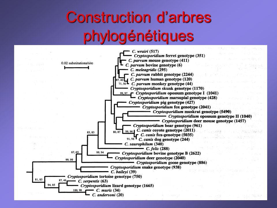 Construction d'arbres phylogénétiques