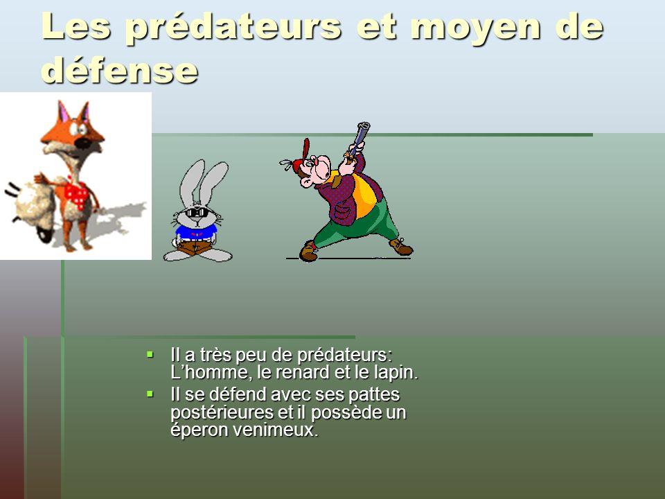 Les prédateurs et moyen de défense