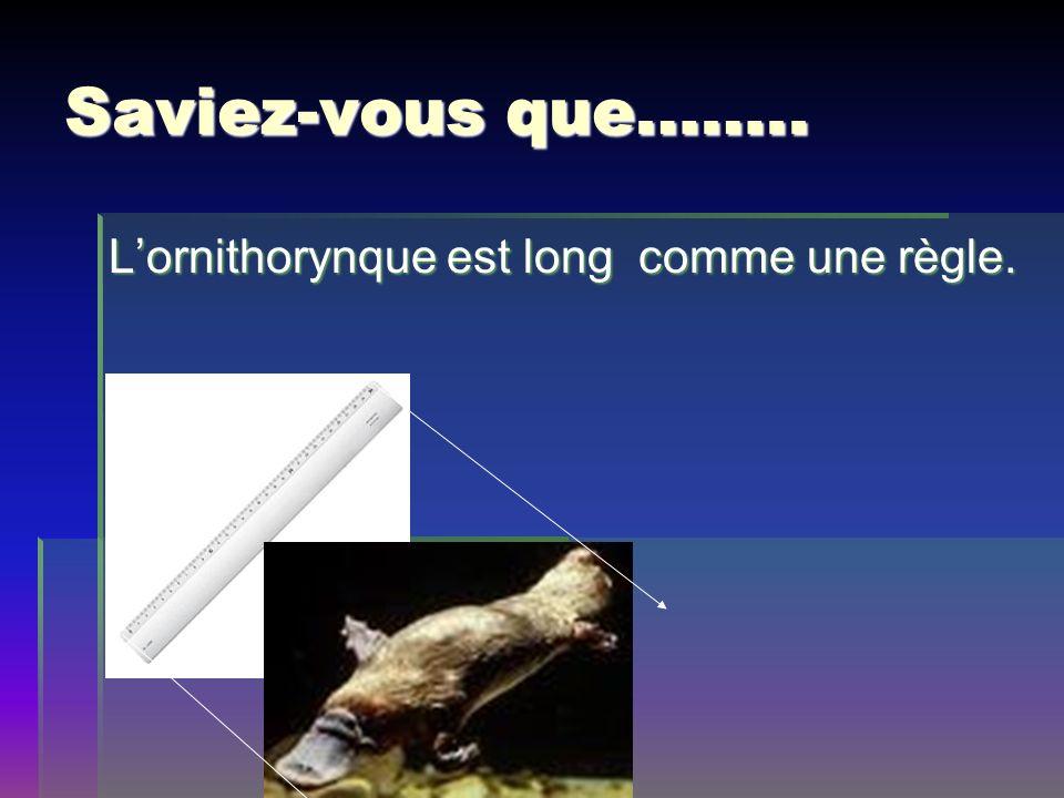 Saviez-vous que…….. L'ornithorynque est long comme une règle.