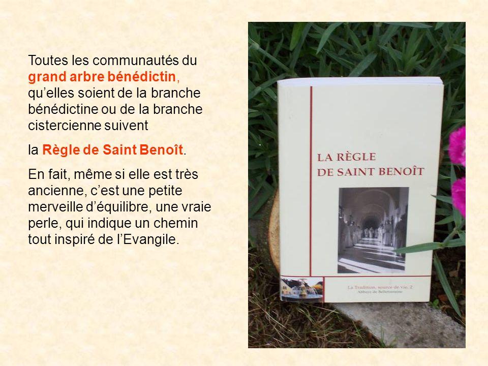 Toutes les communautés du grand arbre bénédictin, qu'elles soient de la branche bénédictine ou de la branche cistercienne suivent