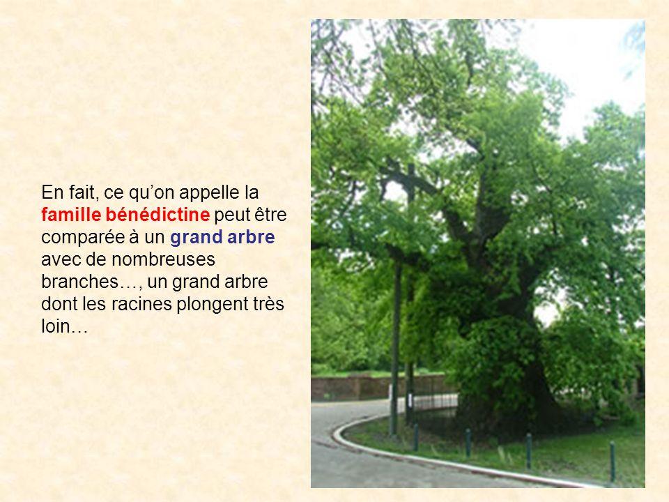En fait, ce qu'on appelle la famille bénédictine peut être comparée à un grand arbre avec de nombreuses branches…, un grand arbre dont les racines plongent très loin…
