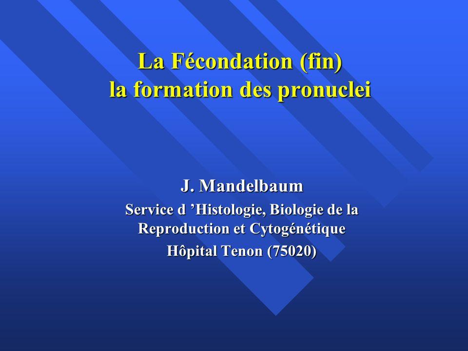 La Fécondation (fin) la formation des pronuclei