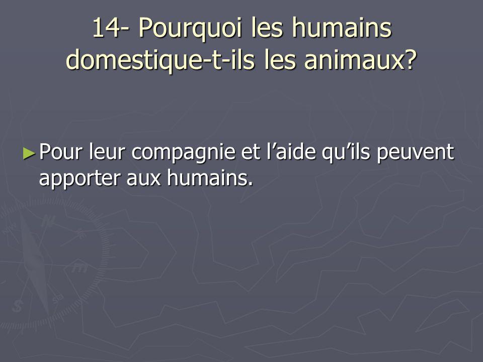 14- Pourquoi les humains domestique-t-ils les animaux