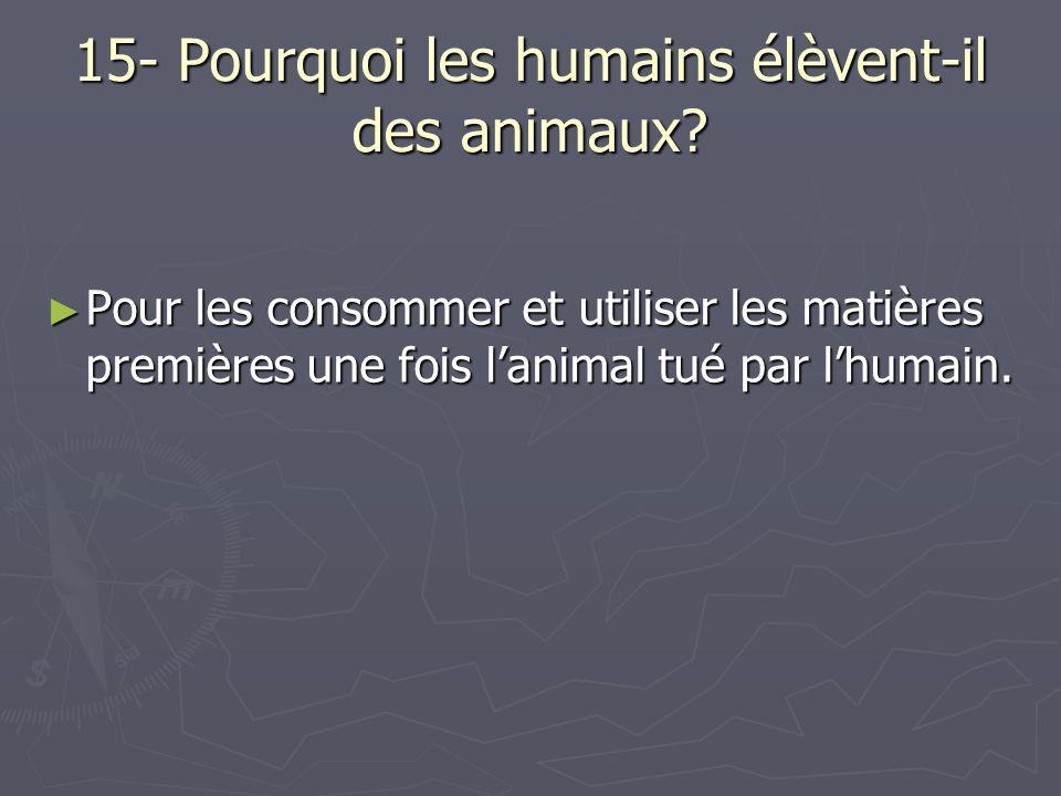 15- Pourquoi les humains élèvent-il des animaux