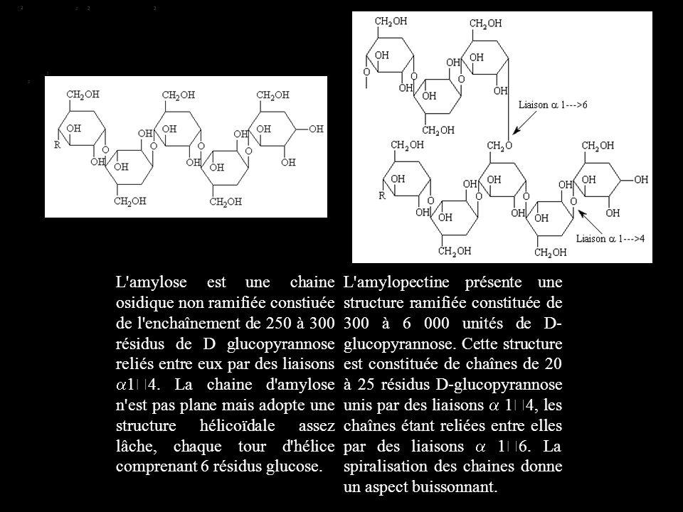 L amylose est une chaine osidique non ramifiée constiuée de l enchaînement de 250 à 300 résidus de D glucopyrannose reliés entre eux par des liaisons a14. La chaine d amylose n est pas plane mais adopte une structure hélicoïdale assez lâche, chaque tour d hélice comprenant 6 résidus glucose.