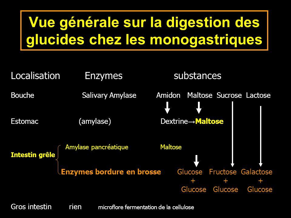 Vue générale sur la digestion des glucides chez les monogastriques