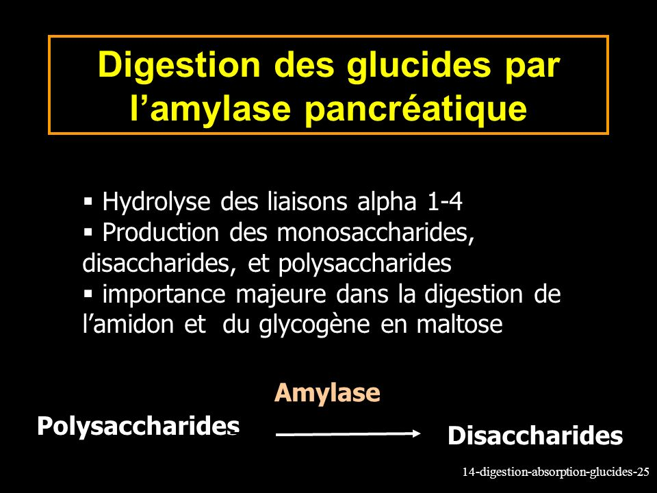 Digestion des glucides par l'amylase pancréatique