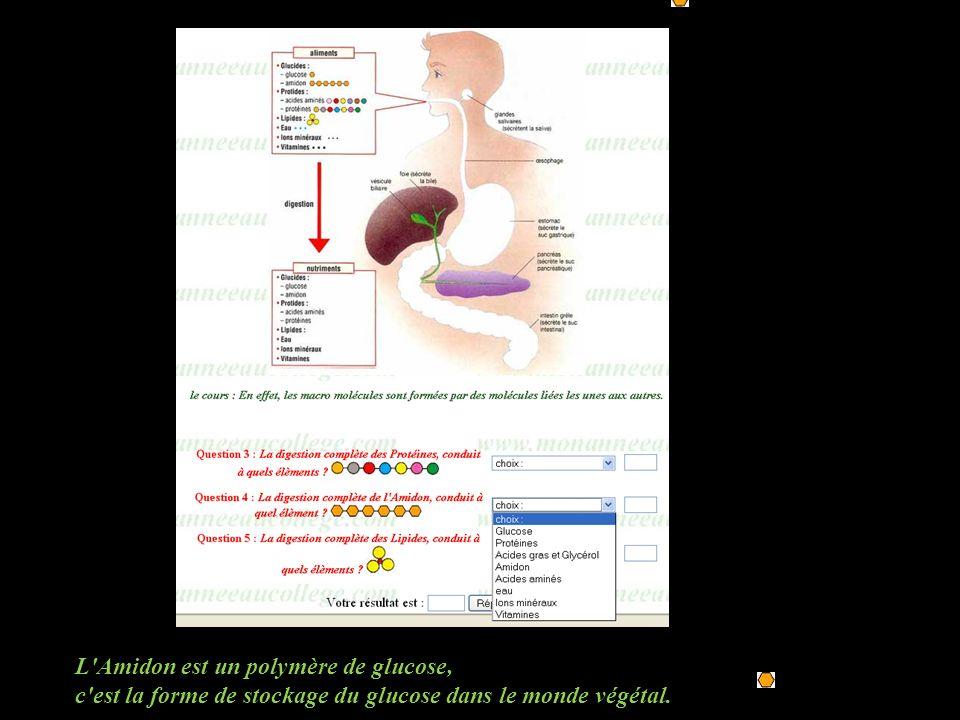 L Amidon est un polymère de glucose,