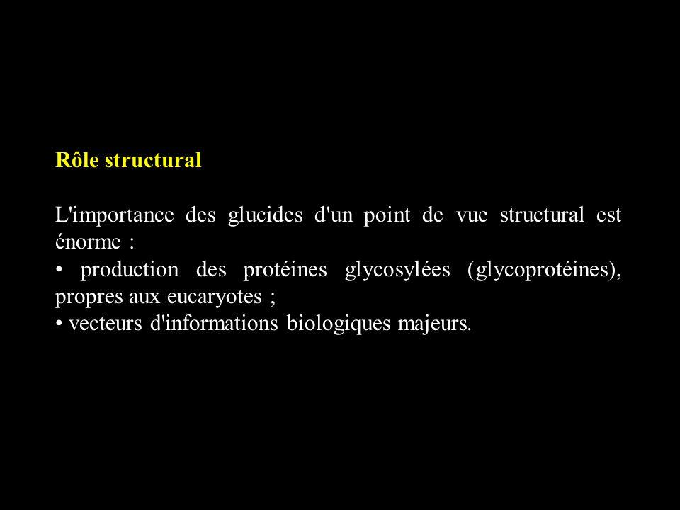 Rôle structural L importance des glucides d un point de vue structural est énorme :