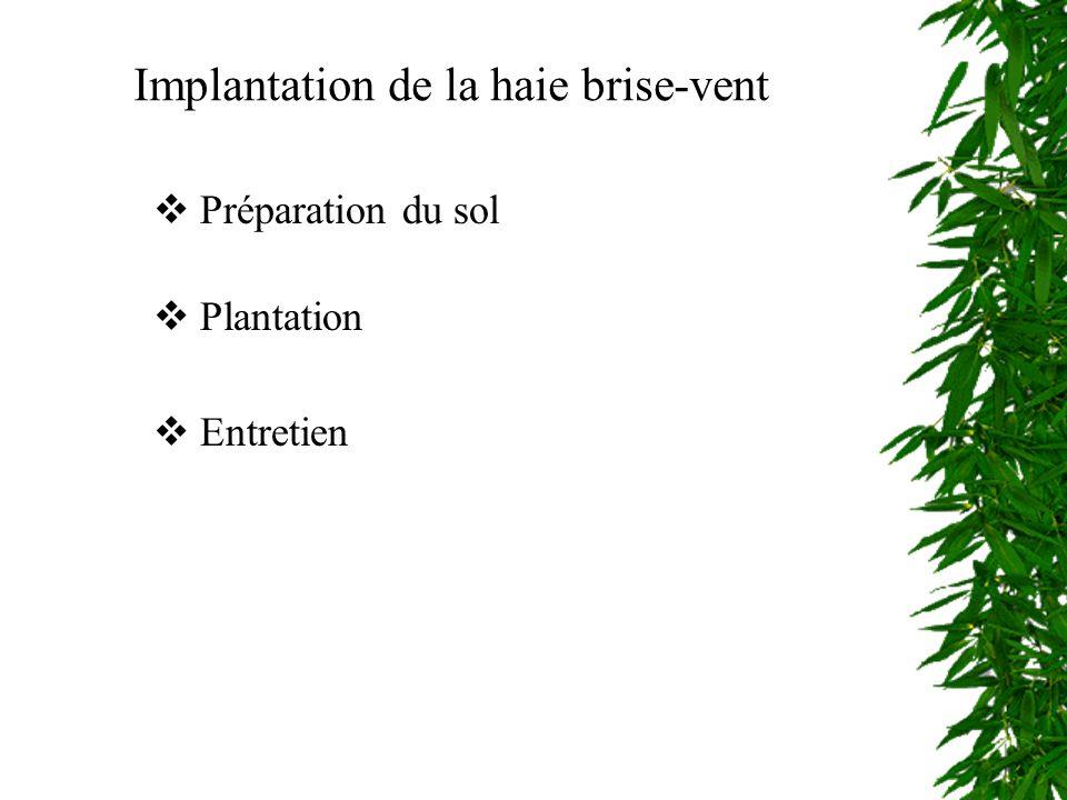 Implantation de la haie brise-vent