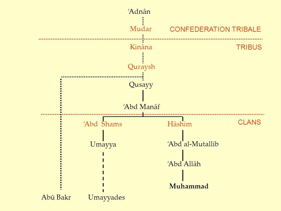 'Adnân Mudar. CONFEDERATION TRIBALE. Kinâna. TRIBUS. Quraysh. Qusayy. 'Abd Manâf. CLANS. 'Abd Shams.