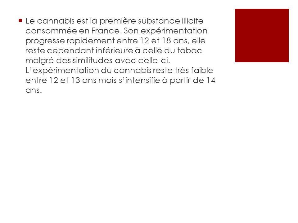 Le cannabis est la première substance illicite consommée en France