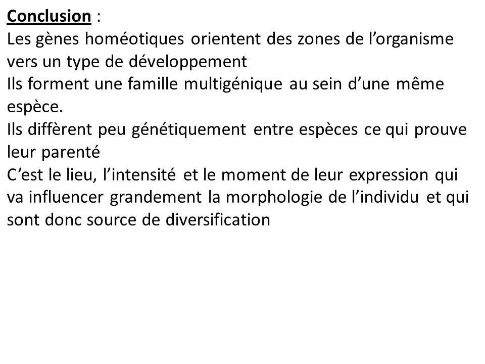 Conclusion : Les gènes homéotiques orientent des zones de l'organisme vers un type de développement.