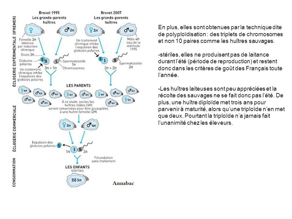En plus, elles sont obtenues par la technique dite de polyploïdisation : des triplets de chromosomes et non 10 paires comme les huîtres sauvages.