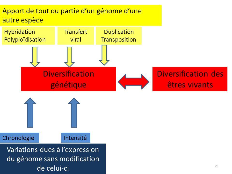 Diversification génétique Diversification des êtres vivants