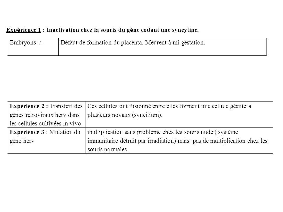 Expérience 1 : Inactivation chez la souris du gène codant une syncytine.