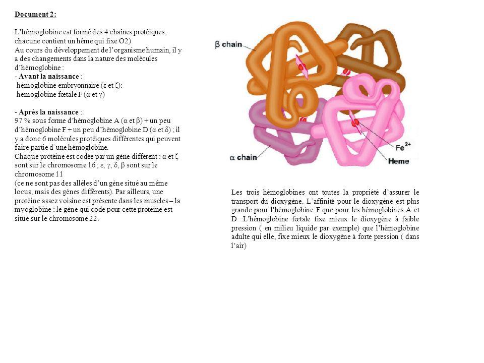 Document 2: L'hémoglobine est formé des 4 chaînes protéiques, chacune contient un hème qui fixe O2)