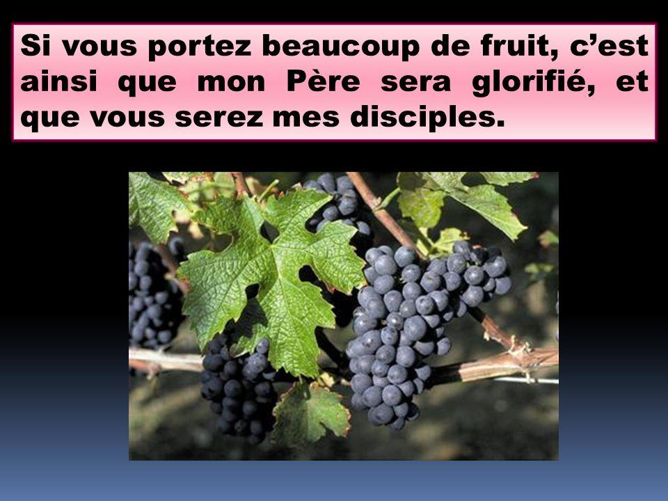 Si vous portez beaucoup de fruit, c'est ainsi que mon Père sera glorifié, et que vous serez mes disciples.